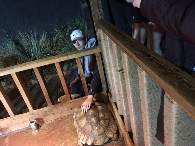 LEAD student petting live turtle in its inclusure