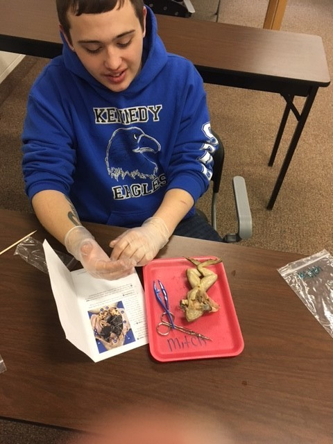 LEAD student putting protective gloves on to start his frog dissection